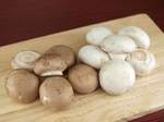 mushroom001.jpg